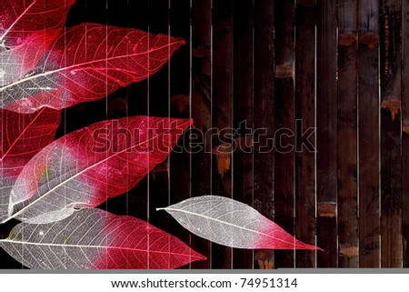 Autumn Colorful Leaves Border over Dark Wood