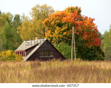 Autumn, colorful tree and roof of home