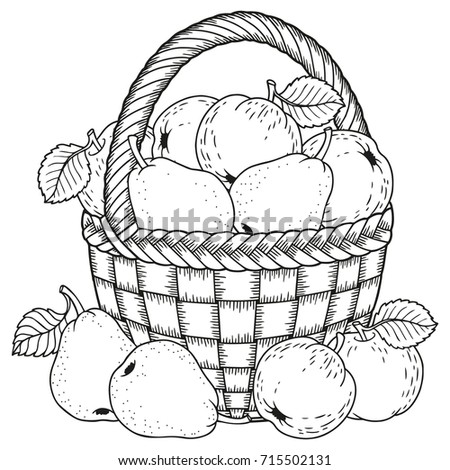Autumn Coloring Page For Adults Black And White Background Silhouette Harvest Of Ripe Apples