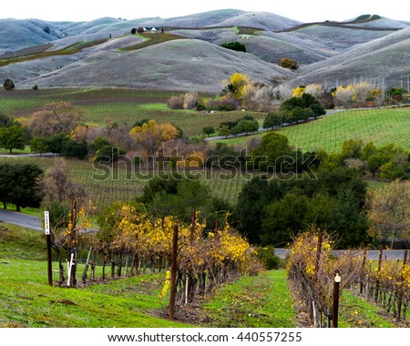 Autumn colors and rolling hills in a Napa Valley California vineyard. Vibrant yellow grapevines, green trees and hills in Napa wine country. Albarino vines at harvest time. - stock photo