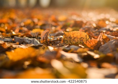 Autumn colors. Autumn leaves in autumn colours and lights - stock photo