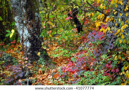 Autumn colors by the water - stock photo