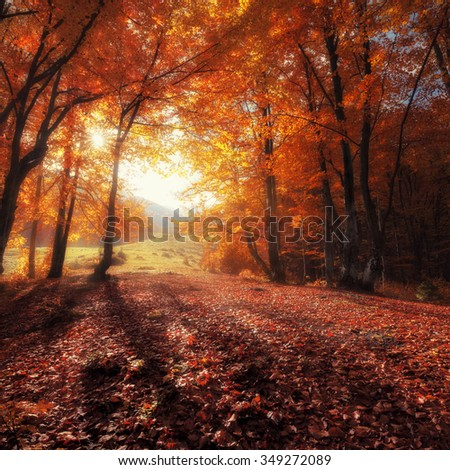 Autumn colors forest at sunny day - stock photo