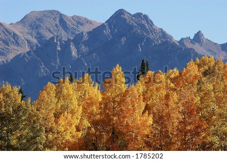 autumn colors in aspen trees with mountain peaks in distance - stock photo