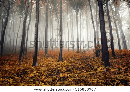autumn colors in foggy forest - stock photo