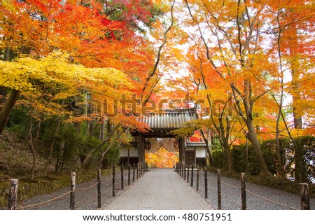 Autumn Colors in Komyoji Temple, Nagaokakyo, Kansai, Japan