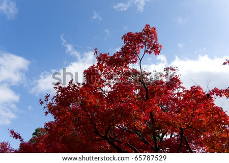 Autumn colors in Kyoto, Japan - stock photo
