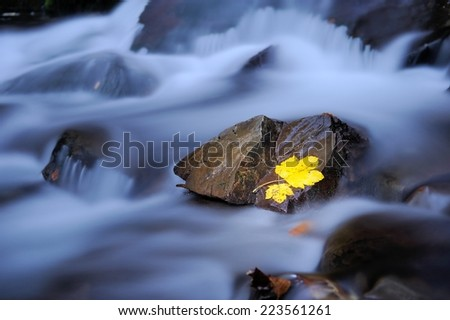 Autumn colors in stream. Leaf is laying on wet basalt stone. Stones and colorful autumn leaves. - stock photo
