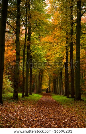 autumn colors in the forest - stock photo