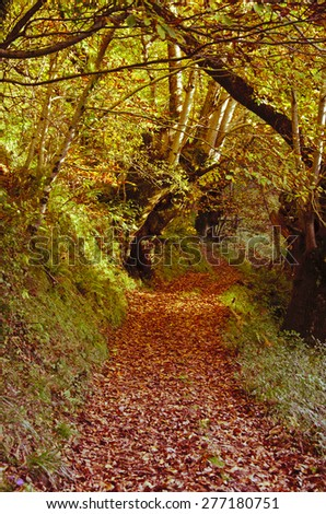 autumn colors in the forest Caurel in Galicia ( Spain ) - stock photo