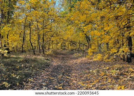 Autumn colors in the forest. Golden yellow colored foliage in the fall - stock photo