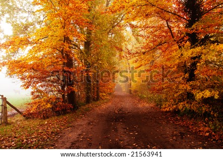 autumn colors in the forest with a horse standing in the fog to the left - stock photo