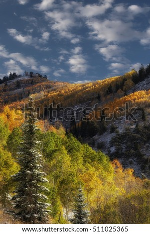 Autumn colors in the Wasatch mountains in Utah USA.