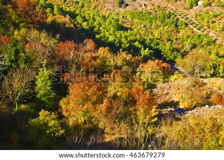 Autumn colors in trees. Spain