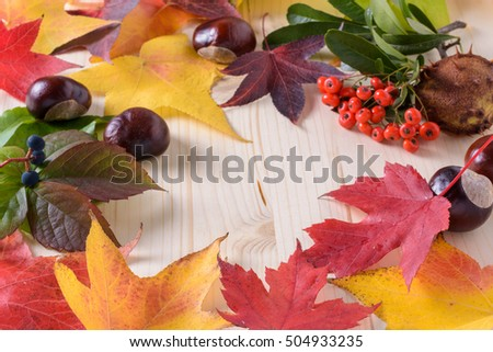 autumn colors, leaves, berries and fruit