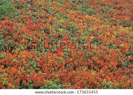 autumn colors, Lower Tatra Mountains, Slovakia
