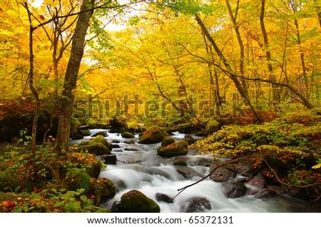 Autumn Colors of Oirase River, located at Aomori Prefecture Japan - stock photo