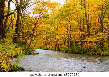 Autumn Colors of Oirase River, located at Aomori Prefecture Japan - stock photo