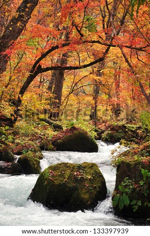 Autumn Colors of Oirase Stream at Aomori,Japan - stock photo