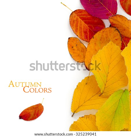 Autumn colors, red and golden foliage as a vertical border isolated on white background, copy space with sample text - stock photo