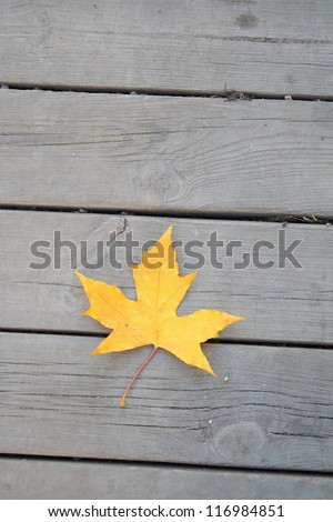 Autumn colors wood background with yellow leaf - stock photo