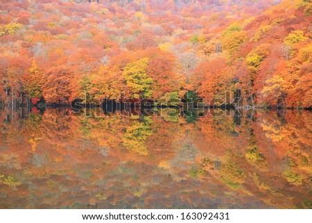 Autumn colours of pond, Tsutanuma, Aomori, Japan - stock photo