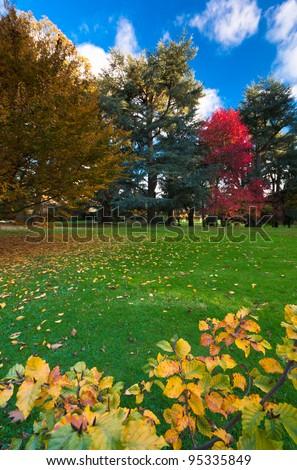 Autumn colours under a blue sky at Batsford arboretum. - stock photo