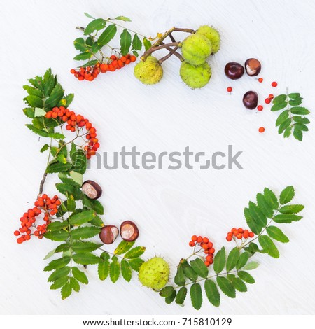 Autumn composition. Pattern made of rowan berries and autumn leaves on white background. Flat lay, top view