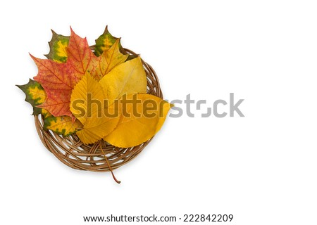 Autumn composition with maple leafs in wicker basket isolated on white - stock photo