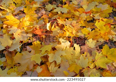 autumn concept fall theme nature background stock photo royalty
