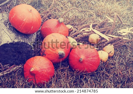 Autumn concept with seasonal fruits and vegetables/Autumn Pumpkins and apples on grass/autumn harvest - stock photo
