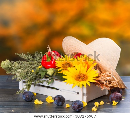 Autumn concept with seasonal fruits and vegetables on wooden table, garden - stock photo