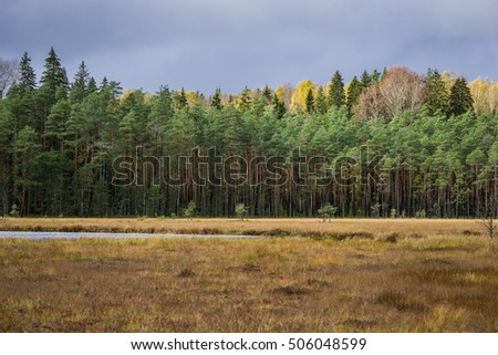 Autumn coniferous forest with lake Norovskoe and grey sky, Russia