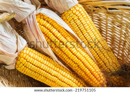 Autumn corn on a basket/Autumn Corn