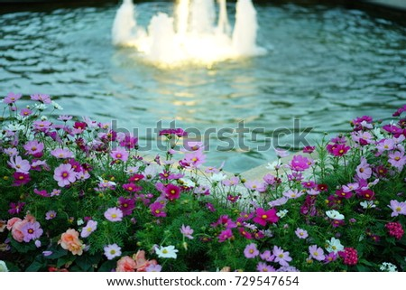 https://thumb7.shutterstock.com/display_pic_with_logo/167494286/729547654/stock-photo-autumn-cosmos-in-a-park-729547654.jpg