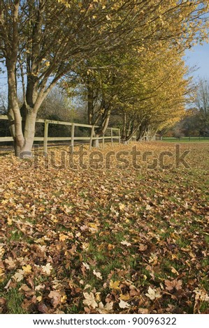 Autumn countryside road and wooden fence, Suffolk, England