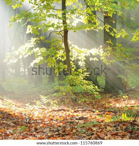 Autumn dawn - stock photo
