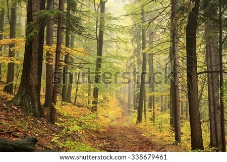 Autumn deciduous forest in misty weather. - stock photo