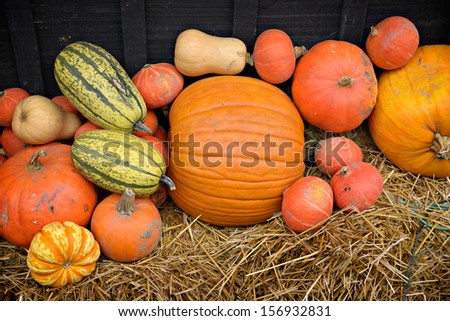 Autumn decor.  Pumpkins, squash, gourds, and hay against dark wooden barn board, arranged in a pleasing fall outdoor display. - stock photo