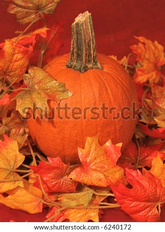 Autumn decorations of various gourds vegetables and leaves for halloween or thanksgiving - stock photo