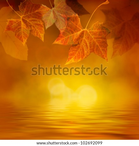 Autumn design background with colorful green and yellow leaves falling from the tree - stock photo