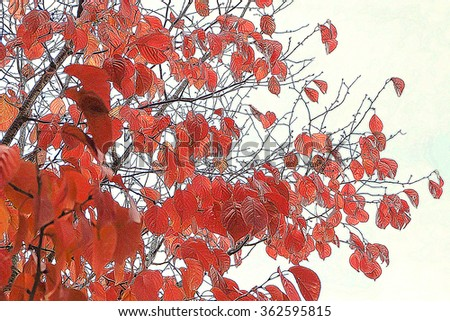 Autumn design background with red leaves in retro colors. Abstract autumn beauty background