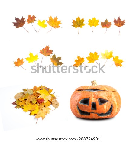 Autumn design elements. collage. leaves, halloween pumpkin. white background - stock photo