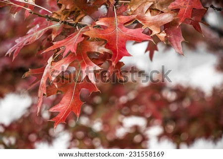 autumn detail in a park, Hamburg, Germany - stock photo