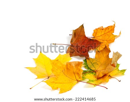 Autumn dry maple leafs at corner. Autumn background with copy space. - stock photo