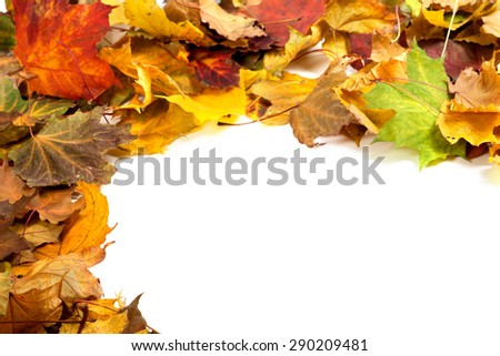 Autumn dry maple leafs on white background with copy space - stock photo