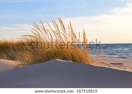 Autumn Dune Grass. Beach grasses turn golden brown in autumn and sway in the late day breeze along the shores of Lake Michigan - stock photo