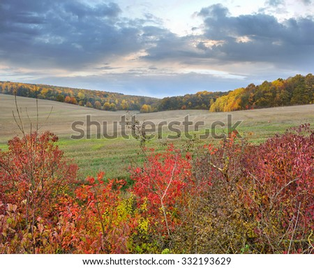 Autumn evening with a colorful forest