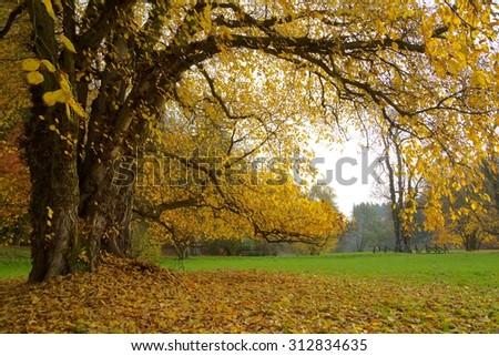 Autumn. Fall. Autumnal Park.   - stock photo