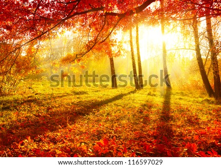 Autumn. Fall. Autumnal Park. Autumn Trees and Leaves - stock photo